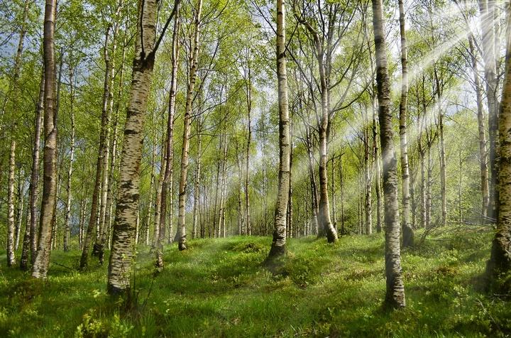 Wald - Copyright: Copyright: Pixabay